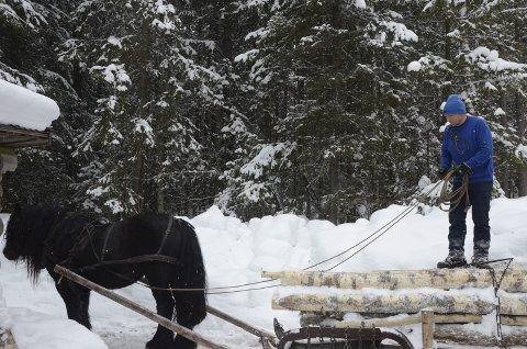 Dette er tømmerkoia som i sin tid ble fraktet fra Turthaugen i Gropmarka, til Maihaugen.Her er Dag Tore Syversen som kjører ut tømmer fra skogen i Maihaugen, med hesten Jonsokken.Turthaughytta - tømmerkoie - svartkaffe - koie - tømmerhytte - enkel standard - tømmervegger.