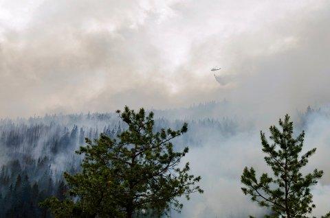 Våren er høytid for skogbranner, og nå har Meteorologisk Institutt sendt ut varsel om stor skogbrannfare.