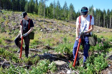 Aleksander Gaden fra Brøttum og Nikolai Rusaanes fra Lismarka er to av 270  ungdommer som reddet plantesesongen for Glommen Mjøsen Skog