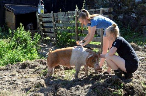 Ingen soldag uten solkrem. Her er det Bakon som får smurt seg av Ida (til høyre) og Kristine Kjernli.