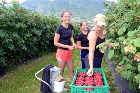 Fin sommerjobb, synes Hanna Hasselquist Evensen fra Lillehammer (til venstre), Ida Sagdalen fra Lillehammer og Kristine Gillebo fra Øyer.
