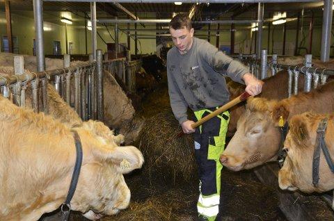 HARDT ARBEID: Anders Sønsteby Flaagen hjelper daglig til med stell av kuene hjemme på gården, og 17-åringen mener at det tunge arbeidet har gitt ham mer styrke i armene.