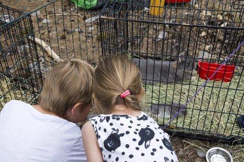 For store og små: Det var noe for store og små på stenhoggerfestivalen i helga. Disse koser seg med dyrene.