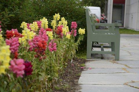 Blomster: Det er vakkert, men folketomt i Byparken. Foto: Toril Risholm