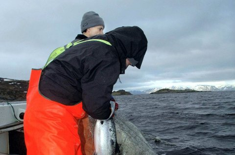 ENSIDIG REGULERING: Sjølaksfiskernes organisasjoner mener at deres fiske har blitt redusert kraftig samtidig som fisket i elvene har økt minst tilsvarende.Foto: Alf Helge Jensen
