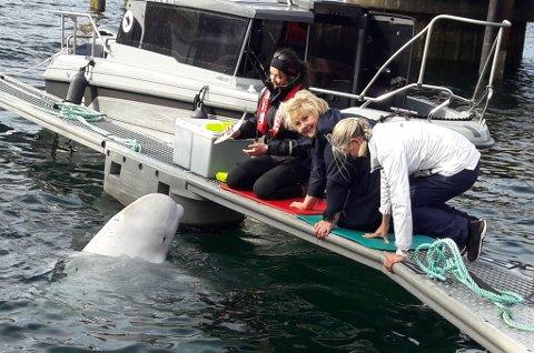 - FANTASTISK: - En fantastisk opplevelse, sier Erna Solberg om å møte Hvaldimir i havna i Hammerfest.