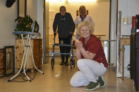 Travelt: Olaf Bjørnstad følges inn i stua av Anne Wiel. Kyllingene er ruget fram hjemme på småbruket til Pia Finskud (foran).