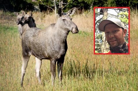 RYKKET UT: Martin Brenne (innfelt) hadde et noe uvanlig oppdrag i natt da han måtte rykke ut og hjelpe to livredde jenter ned fra et tre i natt etter at en elgokse løp etter dem på Urdal på Kirkeøy. Elgen på bilde er for øvrig en illustrasjonselg.