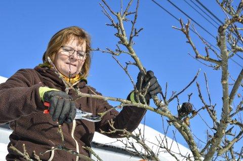 Klipper: Så fort vinteren slipper taket, er det tid for å tenke beskjæring i hagen. Her er Anne-Birgit Fahre Brødsjømoen i sving med saksa i et epletre.