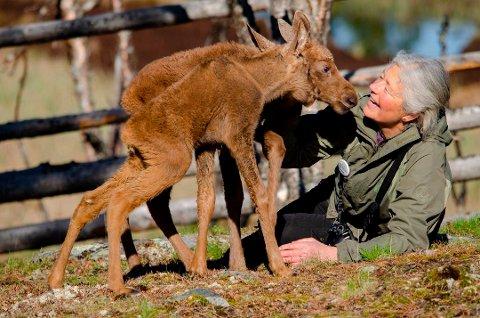 ARBEID MED DYRA: Barn i Nore og Uvdal kan ha sommerskole på Langedrag. Her ser vi Tuva Thorson og en elgkalv.