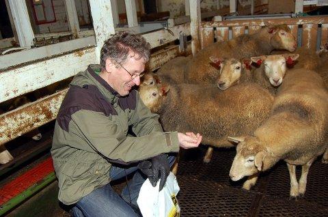 STØRST I NORDLAND: Vestvågøy har flest sauebruk i Nordland. Gustav A. Karlsen mener Lofotlam er en forklaring. Arkivfoto: Magnar Johansen