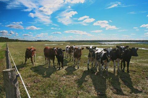 MER ØKOLOGISK: Økologisk mat selger stadig bedre, og spesielt populært er meierivarer.