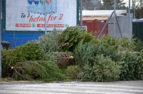 HENTES: Julen varer visst ikke helt til påske. De første juletrærne hentes allerede lørdag 6. januar i år. Arkivfoto