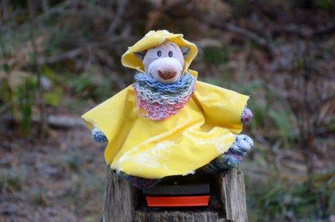 HØSTFIN: Denne lille karen har gledet turgåere i Østmarka i en årrekke.