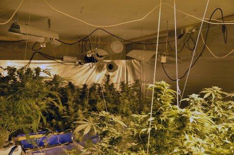 BESLAG: Dette synet møtte politiet da de aksjonerte mot boligen i Tromvik på Kvaløya i februar 2014. Cannabisplantasjen er ennå den største som er avdekket i Nord-Norge.