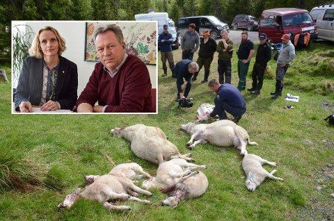 - Vi vil ikke ha en ny ulvesommer som i fjor i våre beiteprioriterte områder, sier beitelagstalsmann Kjetil Ulset og regionrådsleder Guri Bråthen. Tirsdag møter de miljøvernministeren.