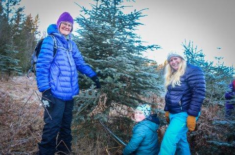 Fant årets juletre: Lauritz Heltmark Sebjørnsen (7) og mamma Linda Heltmark fant sitt drømmejuletre i Hebekkskogen. Anne Beth Lie (t.v.) hjalp til å felle det. alle foto: Åsmund A. Løvdal