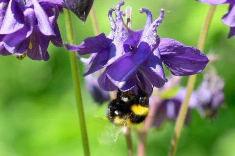 SMÅKRYP: Bier trives best med mange ulike typer pollen.