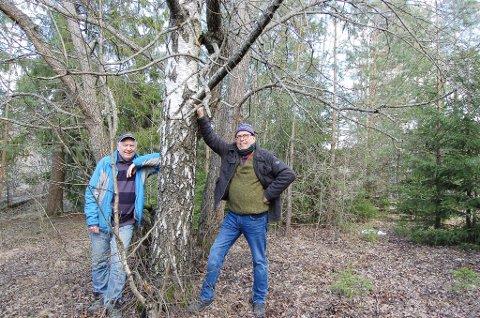 NÅ SMILER DE: De gleder seg over å kunne nyte Hundremeterskogen Kollen på Kolbotn. - Men vi blir fort sure hvis også dette området blir ødelagt av utbygging, sier Steinar Karlsrud (t.v.) og Severin Breivik, henholdsvis leder og nestleder i Oppegård historielag.