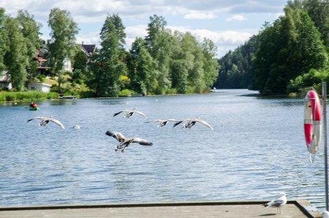 BAD ANDRE STEDER:  Kommuneoverlegen anbefaler å heller oppsøke andre badesteder.