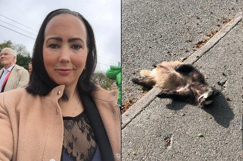 GREVLING: Lise Mathisen fant en død grevling ved veien i Dølabakken. Hun fikk hjelp av en tilfeldig kommuneansatt til å fjerne dyret fra veien. Foto: Pivat