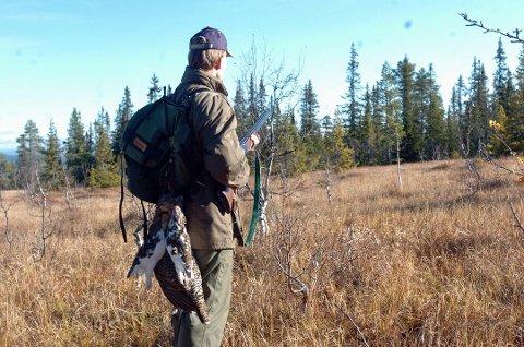KULDE: Etter mange år med nedgang, har det de siste årene vært oppgang i rype- og skogsfugl flere steder i Hedmark. Nå kan en kald vår og sommer skape problemer for bestanden. (Arkivfoto: Tore Sandberg)