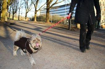 TURVENN: Aktiviserer og går du nok turer med hunden din? (Illustrasjonsfoto: Newswire)