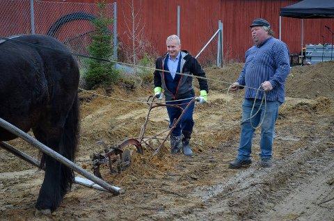 BAK PLOGEN: Styreleder Knut Storberget brukte en gammel plog for å markere byggestarten for det nye museumsbygget på Glomdalsmuseet i Elverum. Her sammen med hestekaren Ole Viktor Larsen og hesten Bron.
