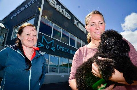 BEDRE: Toypuddelen Luis er nå i bedring til eier Trine Ellingsen  og veterinær Tone Camilla Jørgensens (t.v.) store glede.