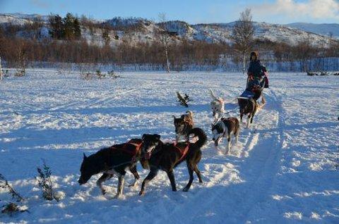 Hundesledekjøringa fra Rauvatnet søndag er avlyst.