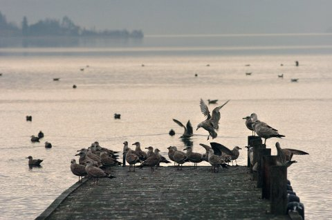FUGLER TIL BESVÆR: I dagens Direkte linje spør en leser hvordan man kan unngå at måker og andre fugler trekker mot folk.