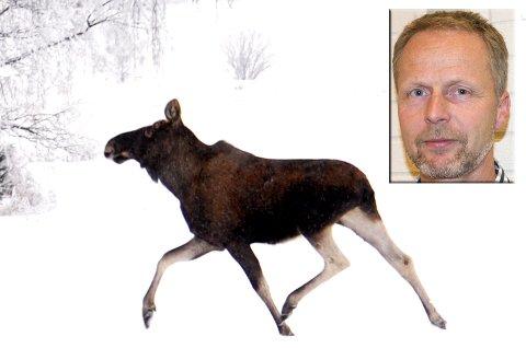 Per Olimb i Viltnemnda advarer mot mye elg på Moesmoen.