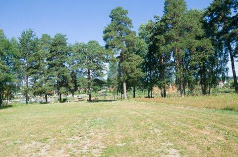 ELVELANGS: - Hønefoss har et unikt område «elvelangs» fra Glatved, Tippen, Petersøya, Søndre park, Schjongslunden og Benterud, sier Knut Fure.