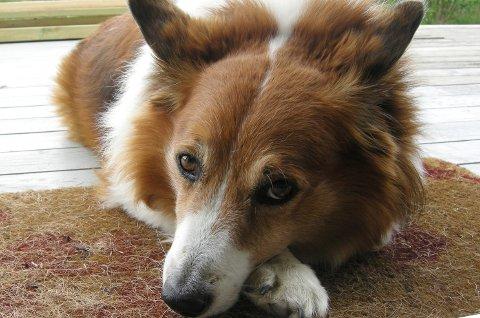 *** Local Caption *** Hundeeiere kan gjøre mye selv for å holde hundene friske.