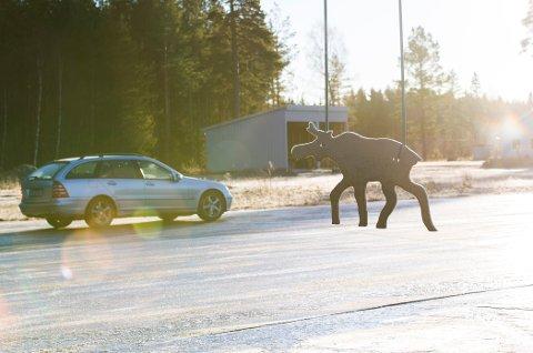 OSLO  20131204. Kommjobb for NTB tema. Morten Fransrud, fagansvarlig i NAF trafikktrening og tidligere kjøreskolelærer kjører på NAFs glattkjøringsbane ved Fetsund.    Foto: Berit Roald / NTB scanpix *** Local Caption *** På NAFs glattkjøringsbane ved Fetsund trener elevene på å møte en elg i trafikken.