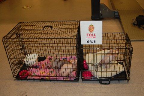 Fire katter ble satt i karantene.