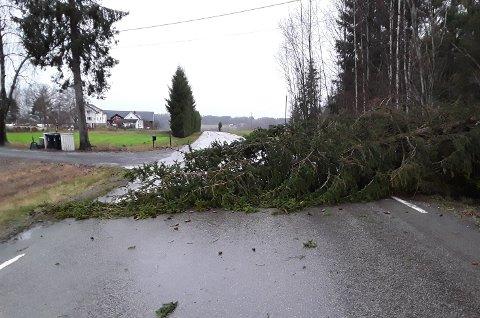 Dette treet falt torsdag morgen over Svenskebyveien.