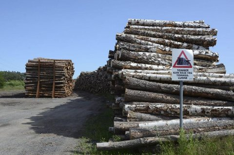 Store dimensjoner: Viken Skog lagrer store mengder tømmer på Sikatomta på Øya, og ifølge Larvik havn skal lageret være godt sikret, og ingen behøver ta seg over området for å nå kyststi eller andre områder. Foto: Bjørn-Tore Sandbrekkene