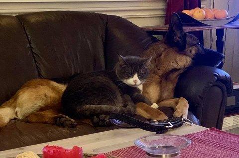 KOS: «Gråpus» og «Tessa» har blitt perlevenner og deler gjerne samme plass i sofaen.