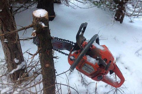Slik fant Ragnar Ettestøl motorsaga si da han kom på jobb i skogen onsdag morgen. Spor i snøen viste at en elg hadde vært på ferde. Foto: Ragnar Ettestøl.