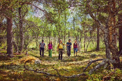 Arrangerer urskogsafari