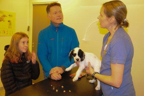 LITEN HJERTEKNUSER: Torgeir Tronslien og datteren Eline (11) med en av valpene som ble vaksinert av veterinær Mari Helgesen.