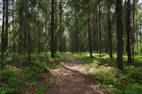 MANGFOLD TRUES: - Den største trusselen mot naturmangfoldet i dag er utbygging, sier miljørådgiver Siri Gilbert i Ås kommune.