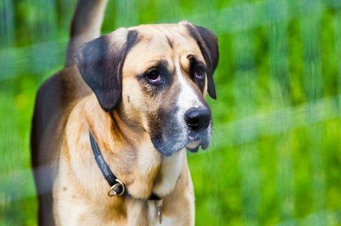 OPPHØRTE: Den generelle båndtvangen opphørte 21. august. Men det er fremdeles mange steder hvor du må holde hunden i bånd.