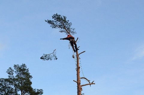 HØYT OPPE: I skogen finner Fredrik Stea Wiik roen, selv om akkurat dette kan virke alt annet enn beroligende for mange.