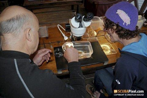 UNDERSØKING: Dykkarar og forskarar ser nærare på kva dei har funnet på havbotnen i Gulen. FOTO: CHRISTIAN SKAUGE.