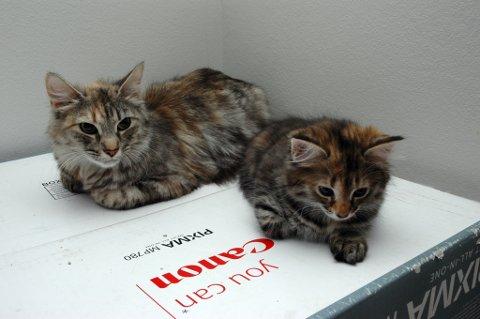 Dette er to av de hjemløse kattene Dyrebeskyttelsen i Bodø har fått inn i løpet av årene. Er de ikke livtruende skadet blir de tatt vare på fram til noen adopterer dem.