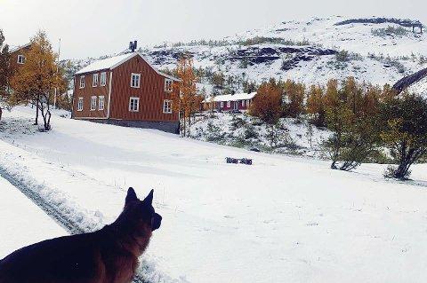 Hunden til Mona Mosti ble helt vill da han så at det var snø ute.