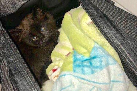 Denne kattungen ble funnet i Lærdalstunnelen. Nå ønsker Dyrevernalliansen tips i saken.