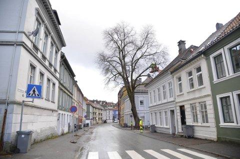 Den gamle almen er historie. Jo Gjerstad sier at det er flere hundre år gammelt.